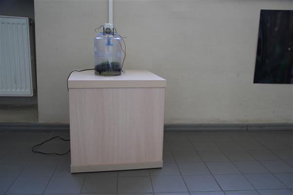 Figure 1. A scale model of a Chetomorpha algal bioreactor. 2015. Installation, Kaunas University of technology. Photo: Lina Rukevičiūtė.